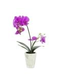 Small & flowering plants
