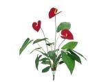 Solitärpflanzen & Büsche