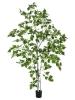 EUROPALMSBirch Tree, artificial plant, 180cm