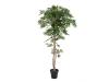 EUROPALMSFicus Longifolia, Kunstpflanze, 165cm