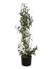 EUROPALMSOlive tree, artificial plant, 104 cm
