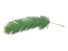 EUROPALMSCoconut king palm branch, artificial, 180cm