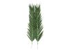 EUROPALMSCoconut king palm branch, artificial, 210cm