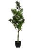 EUROPALMSSteineibe, Kunstpflanze, 90cm