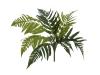 EUROPALMSFrauenfarn, Kunstpflanze, 60cm