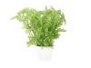 EUROPALMSForest fern in pot, artificial plant, 25 cm