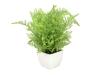 EUROPALMSForest fern in pot, artificial plant, 28 cm