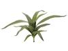 EUROPALMSAloe (EVA), künstlich, grün, 66cm
