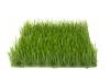 EUROPALMSArtificial grass tile, sun, 25x25cm
