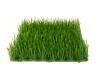 EUROPALMSArtificial grass tile, shade, 25x25cm