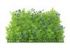 EUROPALMSBuchsmatte, künstlich, grün-lila, 25x25cm