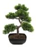 EUROPALMSBonsai-Pinie, Kunstpflanze, 50cm