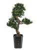 EUROPALMSBonsai podocarpus, artificial plant, 80cm
