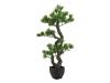 EUROPALMSBonsai Pinie, Kunstpflanze, 70cm