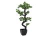 EUROPALMSBonsai Pinie, Kunstpflanze, 95cm