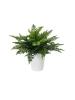 EUROPALMSFern bush in pot, artificial plant, 51 leaves, 48cm