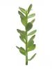 EUROPALMSGeldbäumchen-Spross, Kunstpflanze, 30cm