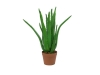 EUROPALMSAloe-Vera-Pflanze, Kunstpflanze, 63cm